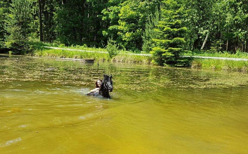 Reiturlaub Schwimmen mit Pferden